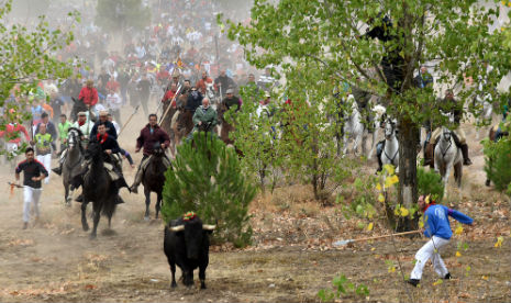 More than 3,000 Spanish festivals involve animal cruelty, says report