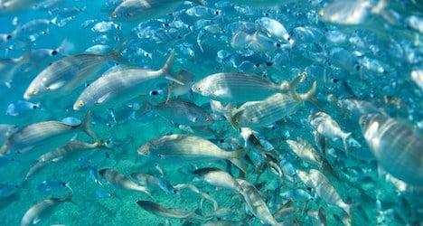 World marine population crashing: WWF report