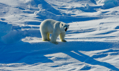 Five countries unite to save the polar bear