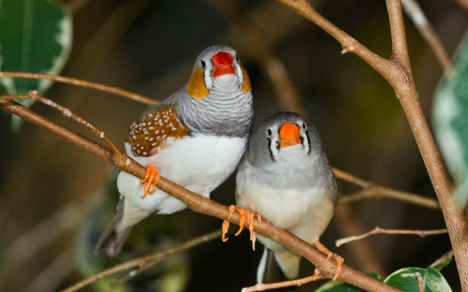 Birds shun matchmaking scientists to find love