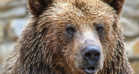 New fears for livestock after Swiss bear sighting