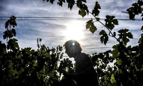 French hunt for climate-change resistant grape