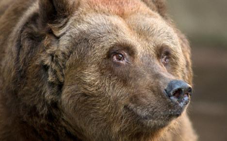 Berlin's last 'city bear' finally put to sleep