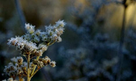 Denmark gets year's first taste of freezing temps