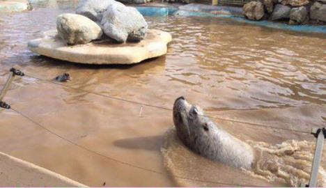 Riviera flood: Marineland park under sea of mud