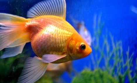 Firefighters rescue pet fish from aquarium blaze