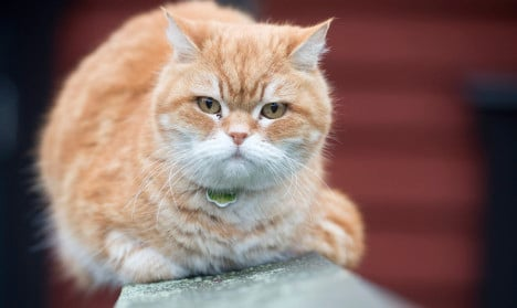 Swedish cat owners in fear after mass deaths