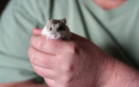 Italian man 'rips head off lover's hamster' in row