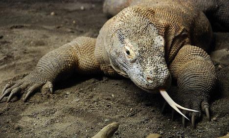 Komodo dragon stolen from French reptile farm