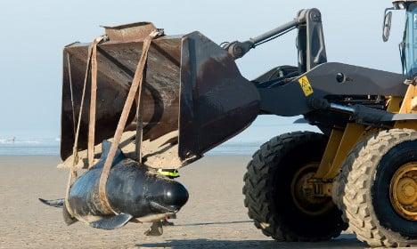 Ten whales found stranded on Calais beach