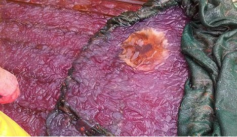 Mystery purple slime coats Norway fjord