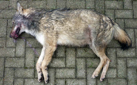 Second wolf found dead in southern Germany