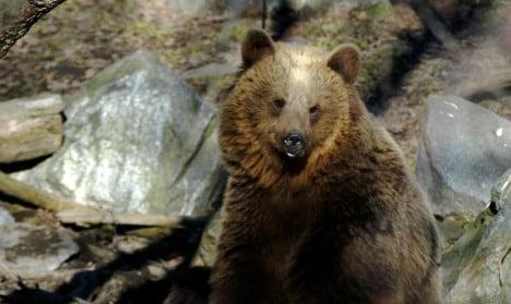 Roaming bear shot dead in Swedish village