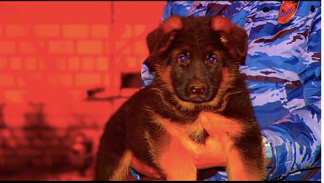 Russian police pup 'exceptional gesture'
