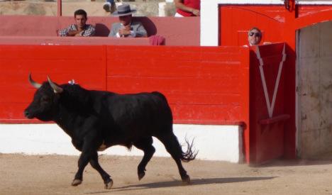 Bullfighting isn't barbaric: What I found in a year on breeding estates