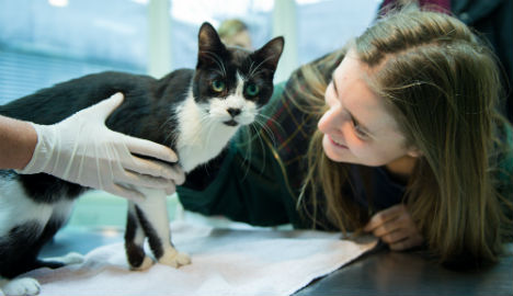 Berlin family's cat returns after seven years