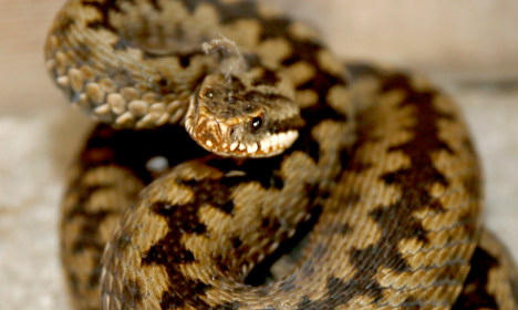 Tests for teen suspect in snake 'gay hate crime'