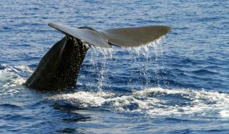 Spain plans super  'whale highway' to help safe migration through Med