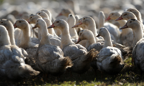 Why France could run out of foie gras next Christmas
