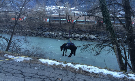 Swiss police save horse in dramatic river rescue