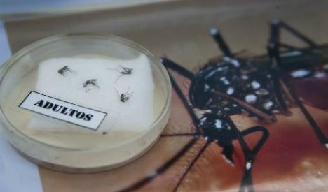 Spain urges calm amid fears over head-shrinking Zika virus