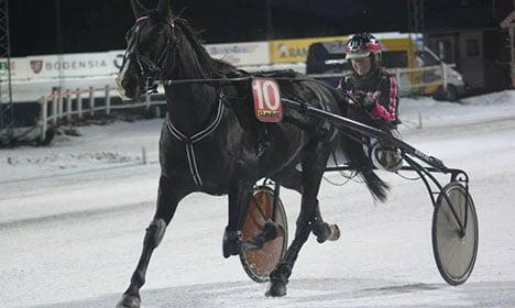 Swedish racer defends eating own dead horse