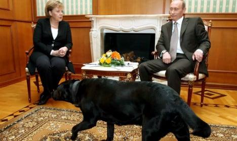 Putin 'didn't mean to scare Merkel with dog'