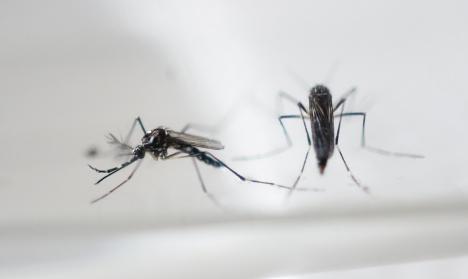 Zika virus: France's pregnant women told to skip Caribbean