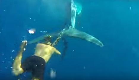 Free Willy: Spanish swimmer saves whale caught in illegal fishing net