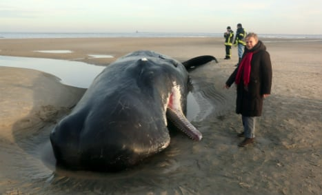 Two sperm whales wash up on German coast