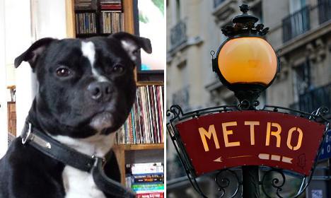 Paris: 'Miracle' Metro dog returned to grateful owner