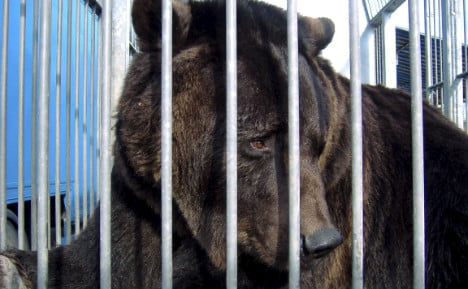 Germany's last travelling circus bear seized by police