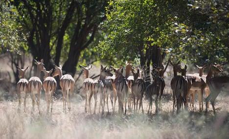 Two Italians killed as they kept watch at Zimbabwe safari park