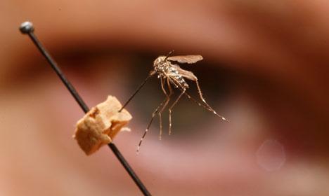 Three Norwegians test positive for Zika virus