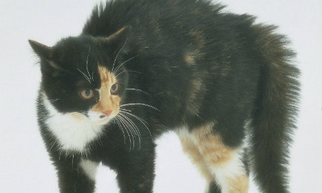 Norway officers who killed cat cleared of wrongdoing