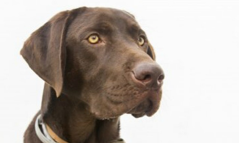 Hero dog saves drowning man in southern Spain… with bark