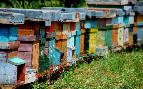 Italian beekeeper offers reward for 1.2m stolen bees