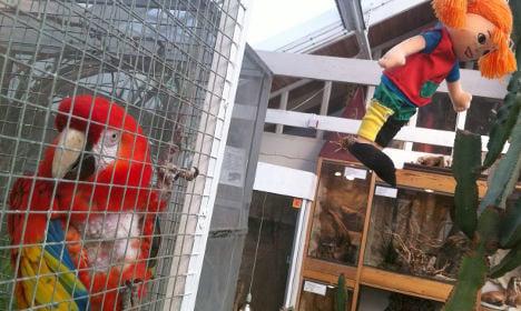 Swedes protest Pippi parrot's 'death sentence'