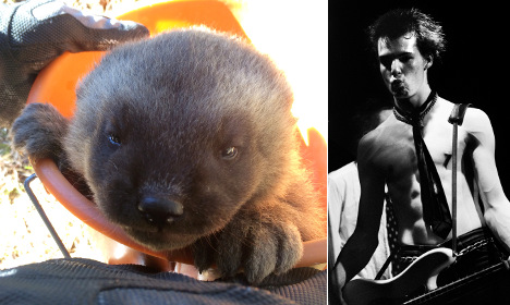 Swedish wolverine baby… or a vicious punk rock legend?