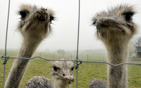 Ostrich hit by car after activists 'free' it from circus