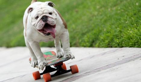 Berlin politician crusades for health of skateboarding dog