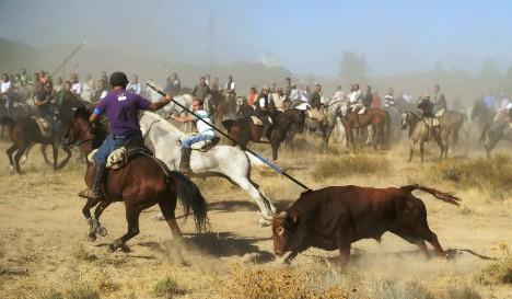 Spanish region bans bull killing in traditional festivals