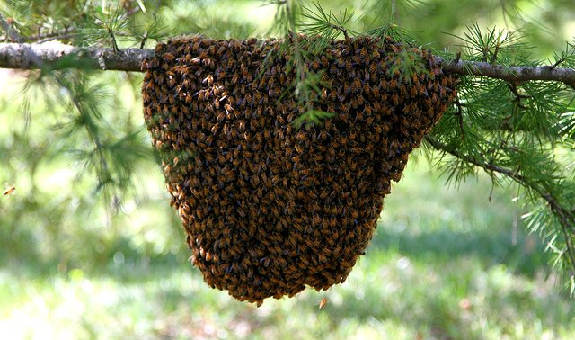 Italian man killed in front of family by swarm of bees