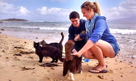 Purrfect: cat-filled beach is a top tourist spot in Sardinia