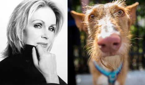 Joanna Lumley demands end to Spain's hunting dog cruelty