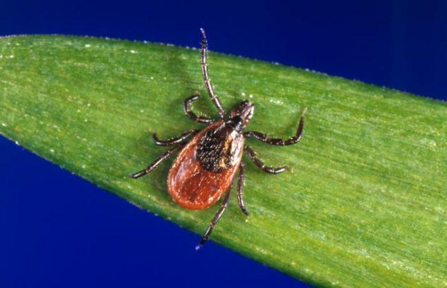 Tick warning for Austria after mild winter