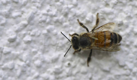 25,000 bees discovered living behind Madrid apartment wall