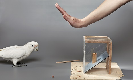 Vienna study shows birds can make 'economic decisions'
