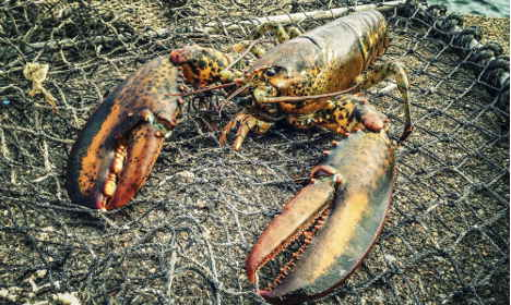 US and Canada reject Sweden's call for lobster ban