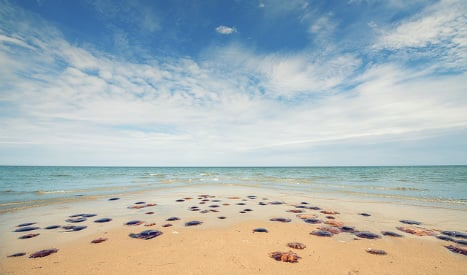 Experts warn of jellyfish boom across Spain's beaches